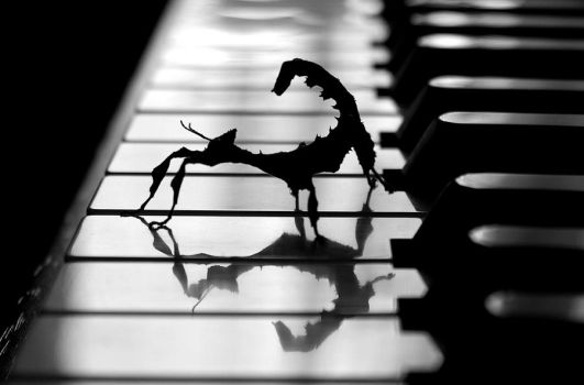 E. tiaratum on the piano by 5wing4