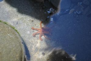 Tide Pools 11 by wolfstockphotos