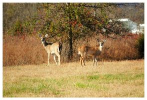Two Deer On An Autumn Day by TheMan268