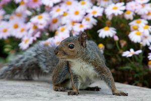 Squirrel on a Bench by secondclaw