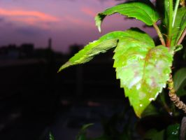 evening leaves by ss03101991