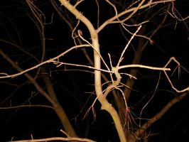 Branches by adamsik