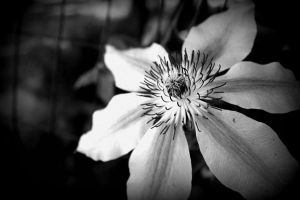 colorless by pirana666