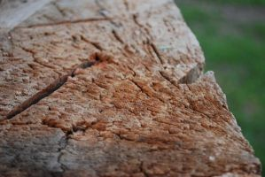 rotten tree trunk by Solct