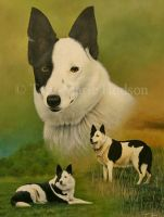 Tess - Border Collie portrait. by Canis-Lupess