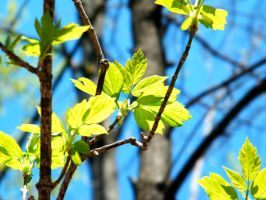 Bright Green Leaves by iluvobiwan91