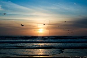 Pismo Beach Sunset Seagulls by MuthaFuckinJaimie