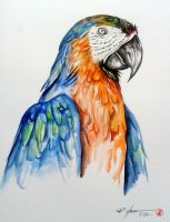 macaw by rchaem