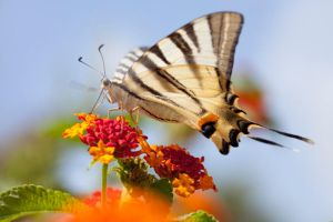 BUTTERFLY by sarahlouisejohnson