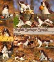 English Springer Spaniel by azu-55
