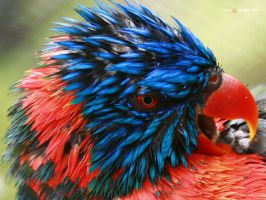 parrot by visualsurgeon