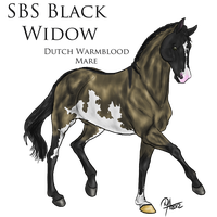 SBS Black Widow by StoryBookStables