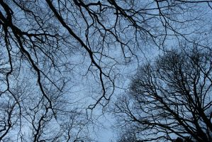 Trees touching the sky by Singingnaturist