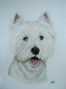 West Highland white terrier - Rodis 2 by alvija