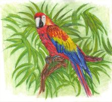 Parrot by carriephlyons