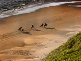 Horses on the Beach by Sidneys1
