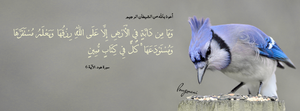 Surat Hud Aya 6 -  FB Cover by LMA-Design
