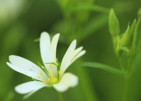 white and green II by indojo