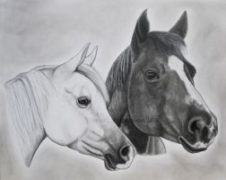2 horse portrait by FlyingFancy1
