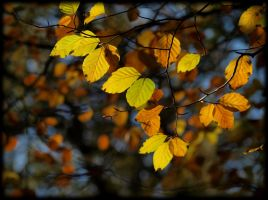 surreal autumn by pagan-live-style