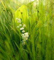 Lily of the Valley by KariLiimatainen