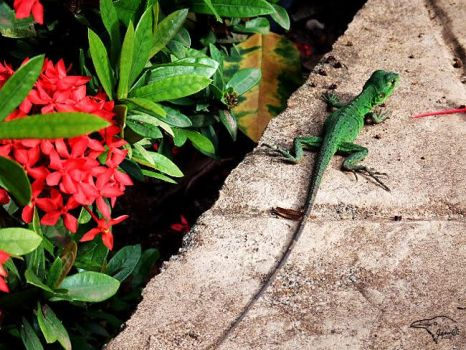A Lizard and Flowers by Korppi-Clicks