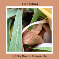 .:Snow Catcher:. by DayDreamsPhotography
