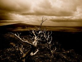Gnarled Tree by xofox