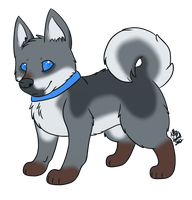 Swedish Vallhund -CLOSED- by CollectionOfWhiskers