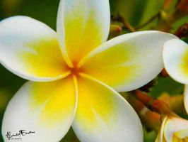 Deep Yellow Flower by Ahmed-Emam