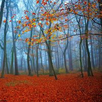autumn breath by augenweide