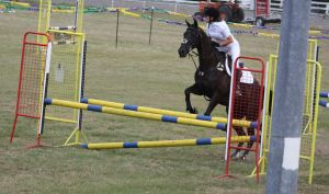 STOCK Showjumping 449 by aussiegal7