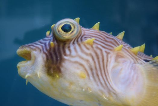 Blowfish by EndOfGreatness