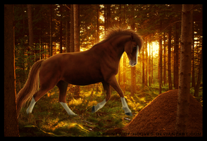 Evening sunlight by prints-of-hooves