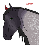 Adham - Assassin Horse by Manar-Darkwing