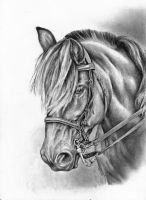 Holter Horse by Adniv