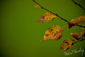 Autumn leaves by Flaeger