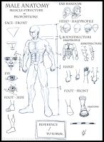 Male Anatomy - Reference Sheet by Vendetti