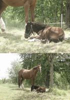 small stallion captured the nature II by little-one-girl