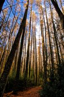 Hanmer Forest by shannon-m