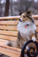 Smart dog by Aannabelle