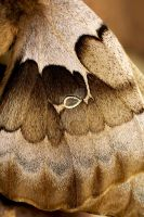 Moth Wing Detail by explicitly