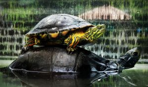 Turtle-back by tugalot