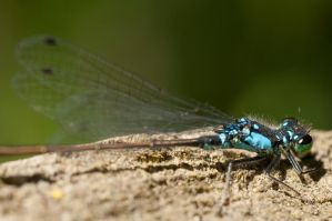 Dragonfly Macro Close-up by happeningstock