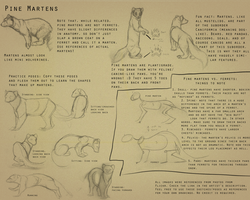 Pine marten notes by umbrafen