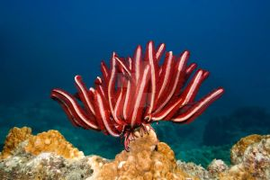 Feather star by MotHaiBaPhoto