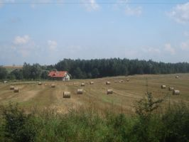 Polish countryside by empatia-stock