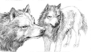 Wolfs - sketch by Grawuar