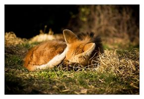 Afternoon Nap by RaVeN8472