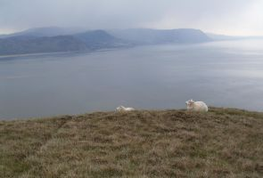 Sheep waiting for the Squall by UncleGargy
